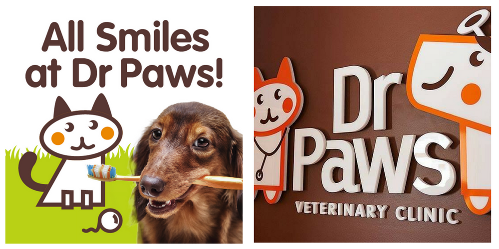 dr paws dental
