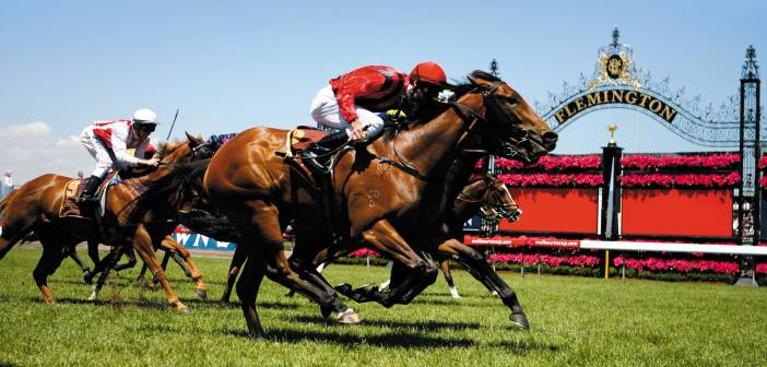 melbourne cup horse racing