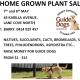 Home-Grown Plant Sale to support Guide Dogs